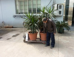 Moving The Plants Due to Feng Shui... 因风水缘故搬迁....