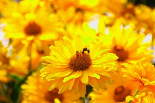 the_golden_season_by_eresaw-d595n76