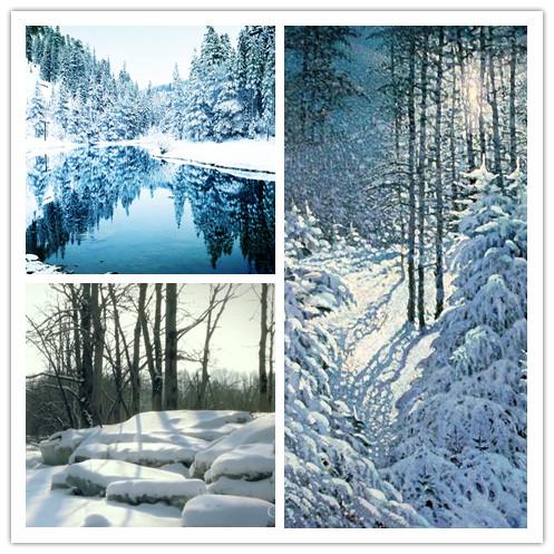 Winter Jungle