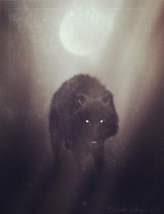 wolf_of_winter_night_by_dark_sheyn_副本