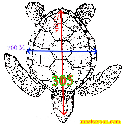 Turtle shape Feng Shui